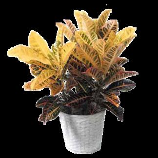 Sympathy Plants